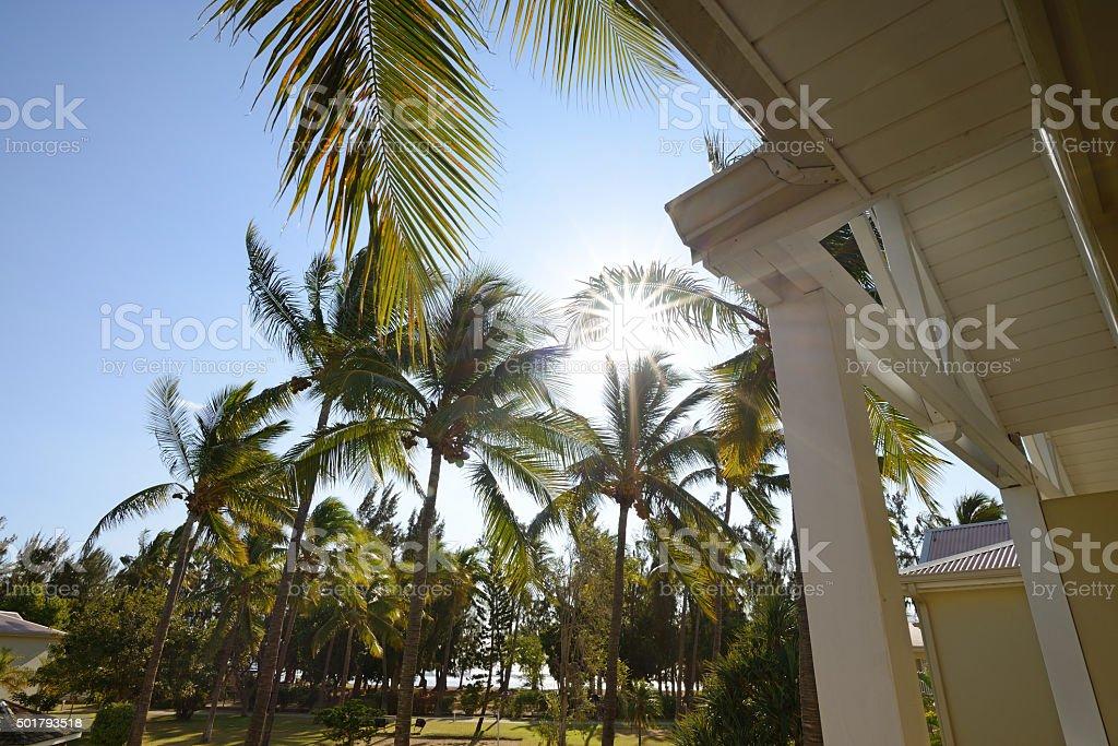 La Reunion - Palms stock photo