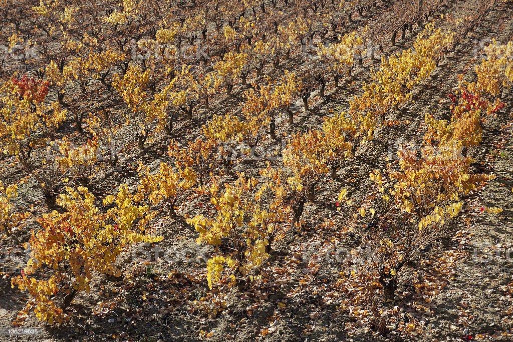 La Rioja vineyard in autumn (Spain) royalty-free stock photo