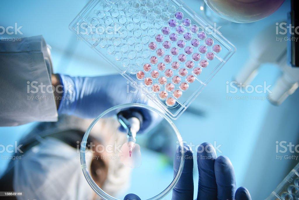 Lab Experiment stock photo