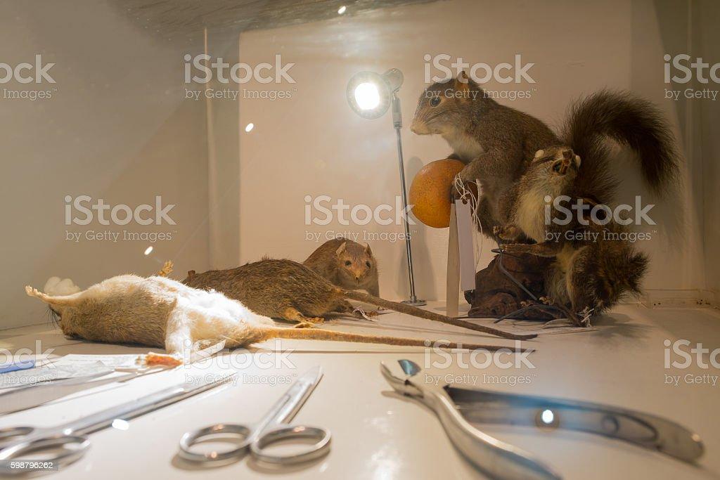 Lab rats and medical devices Lizenzfreies stock-foto