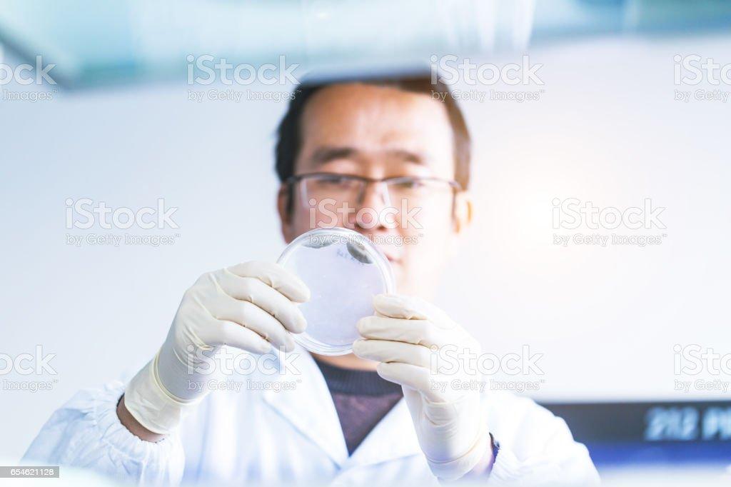 lab researcher holding a petri dish stock photo