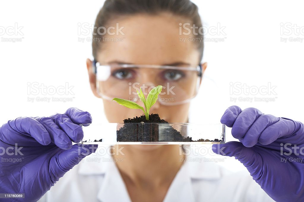 Lab technician with purple gloves holds up seedling royalty-free stock photo