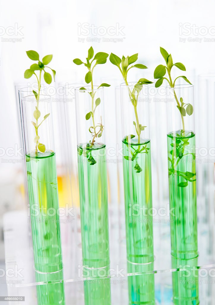 Laboratory analysis of plant stock photo