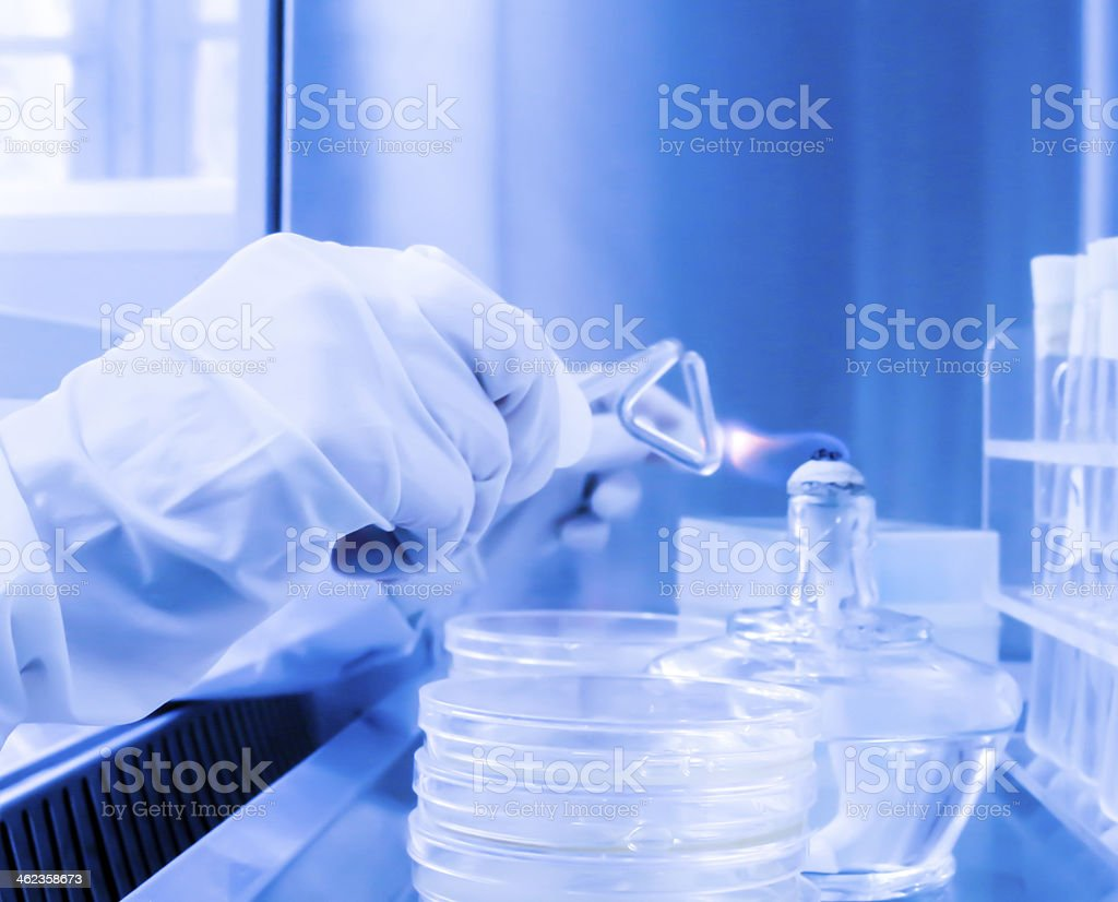 laboratory assistant in a sterile environment for micro-sampling stock photo
