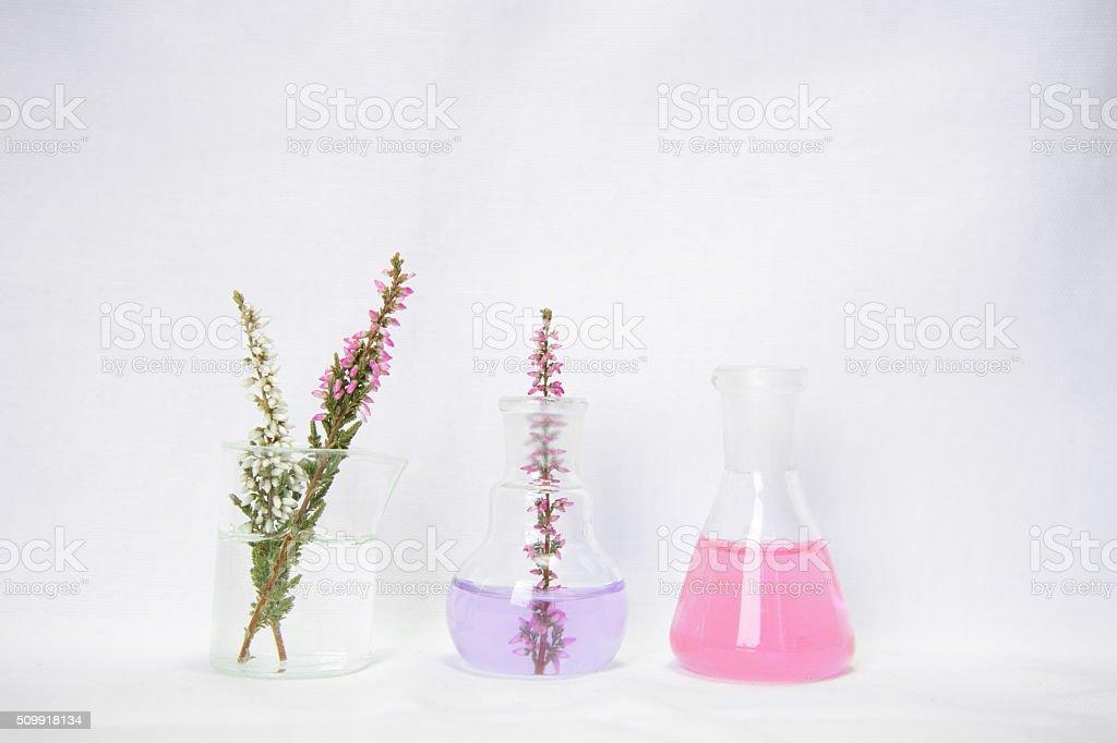 laboratory glassware with flower stock photo