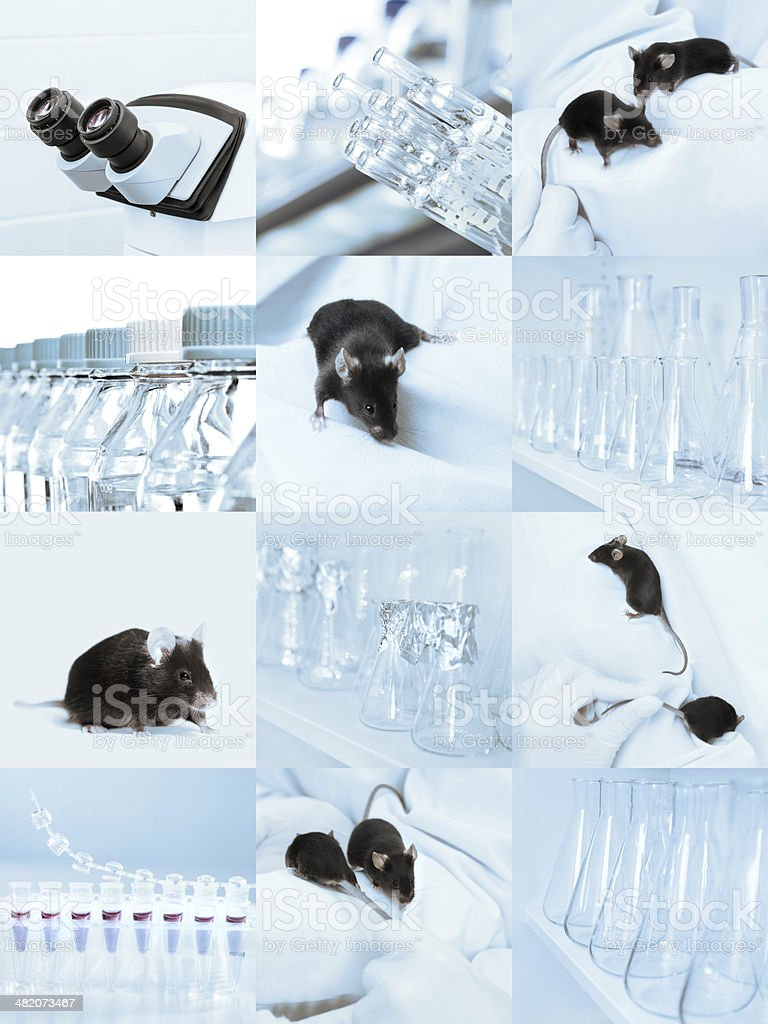 Laboratory mice, set of pictures stock photo