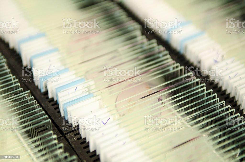 Laboratory pathology test slides stock photo
