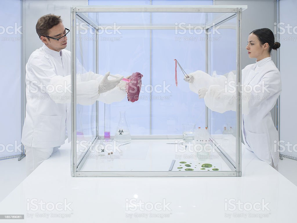 Laboratory workers testing a meat sample royalty-free stock photo