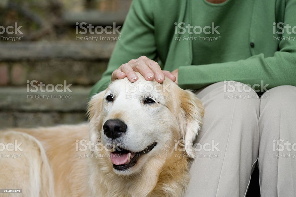 Labrador and owner stock photo