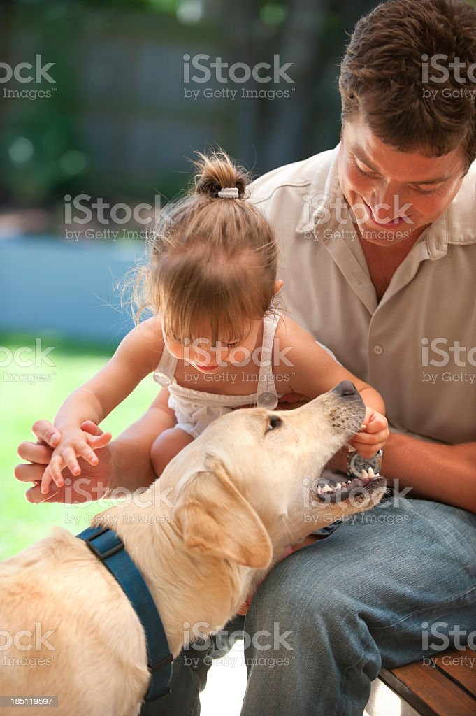 Labrador bites the hand of a little girl with food stock photo