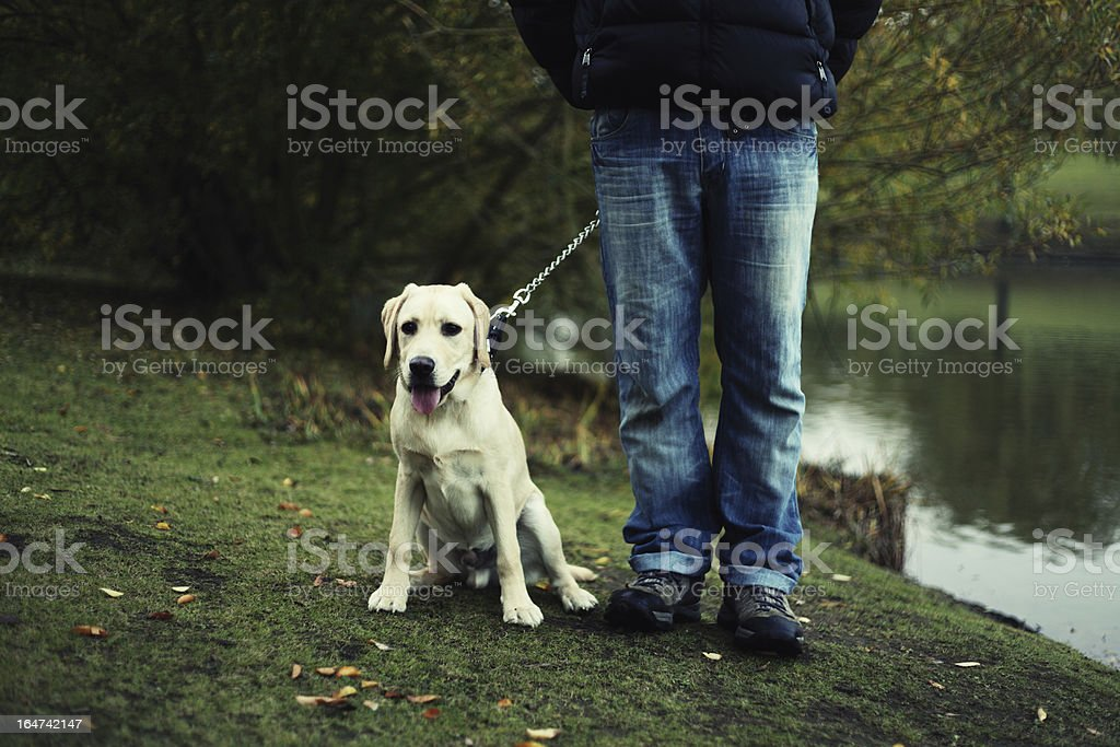 Labrador puppy with owner stock photo