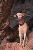 Labrador retriever faithful friend.