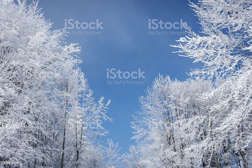 Lace of Frosty Tree Branches against Blue Sky Slovenia stock photo