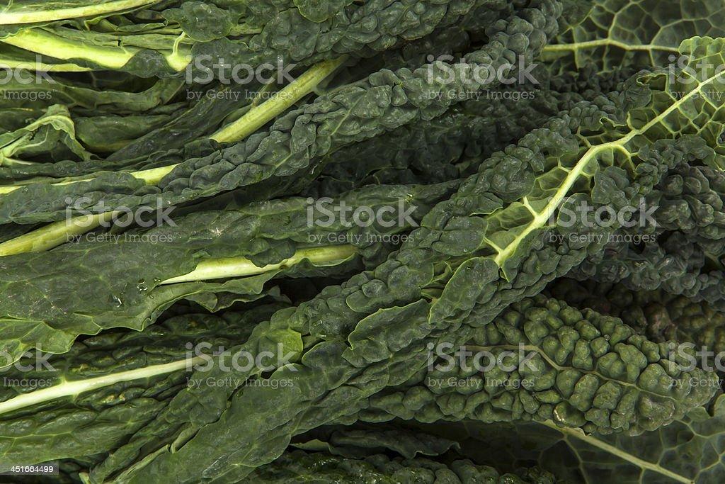 Lacinato Kale stock photo