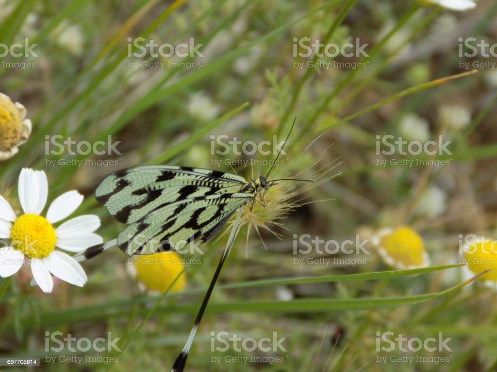 Вlack and white Odonata stock photo