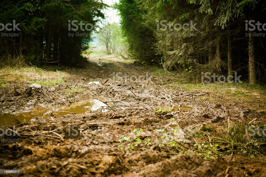 Lack of roads in spring forest stock photo