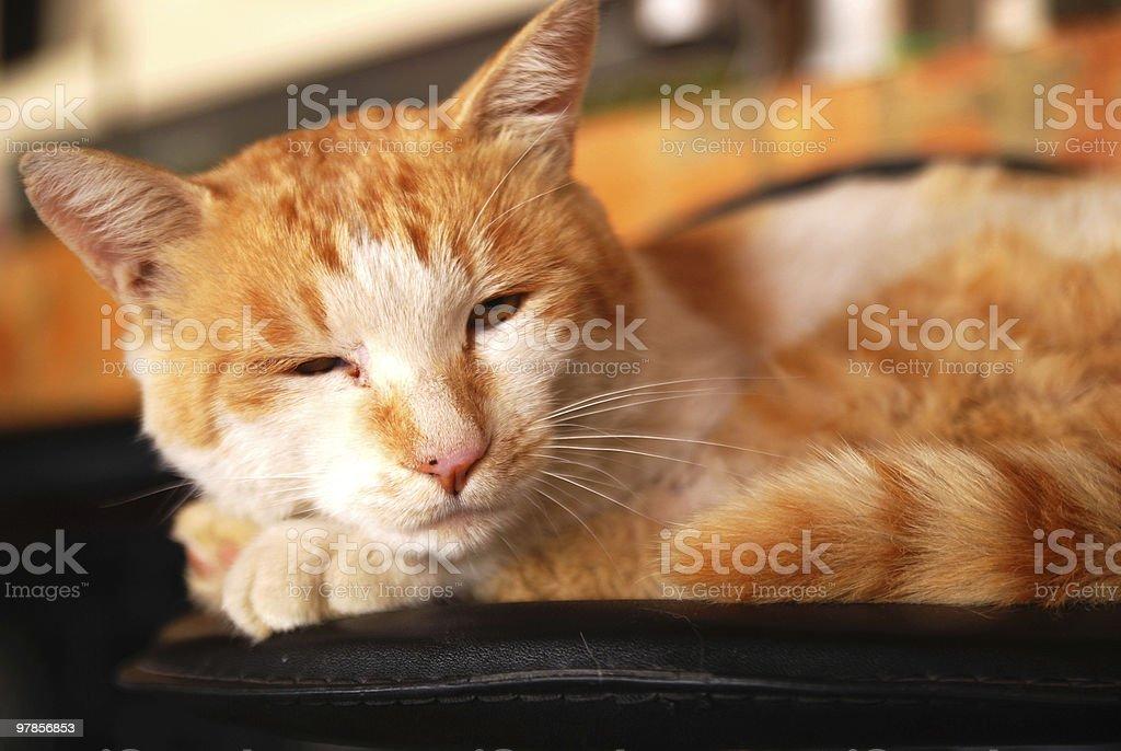 lackadaisical cat stock photo