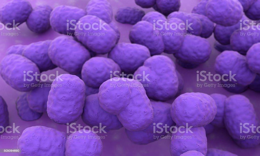 Lactid Acid Bacteria stock photo