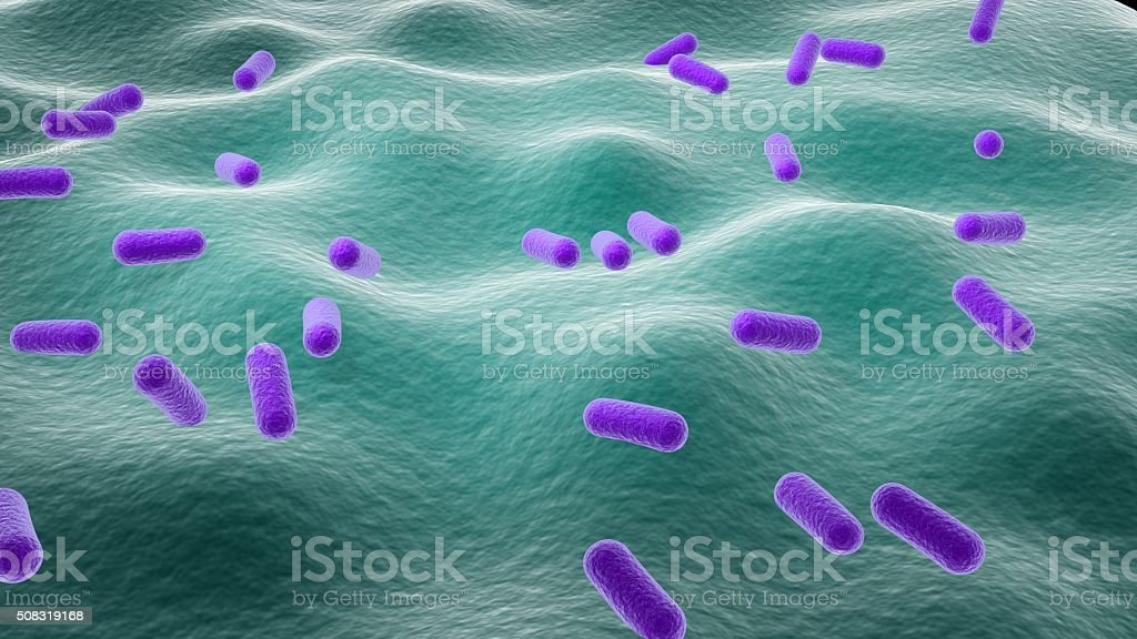 Lactobacillus stock photo