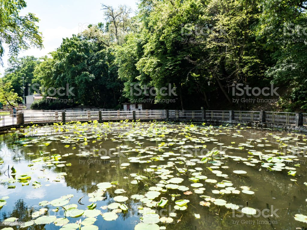 Lacul cu Nuferi (Waterlilies Lake), Felix Baths - Baile Felix, Bihor, Romania stock photo