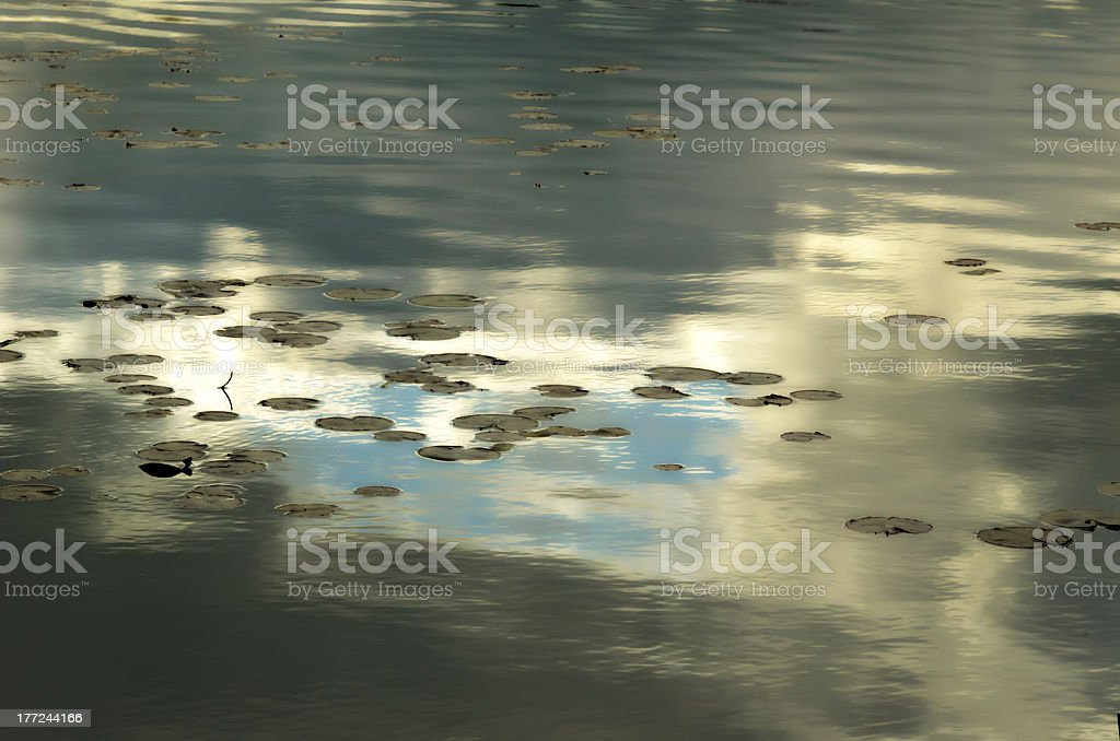 Lacustrine lily pads on moody sky stock photo