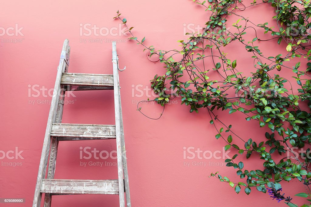 Ladder on a pink wall stock photo