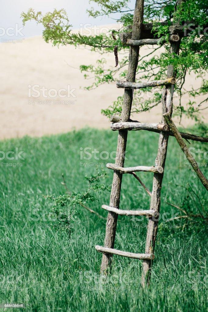 Ladder tree stock photo