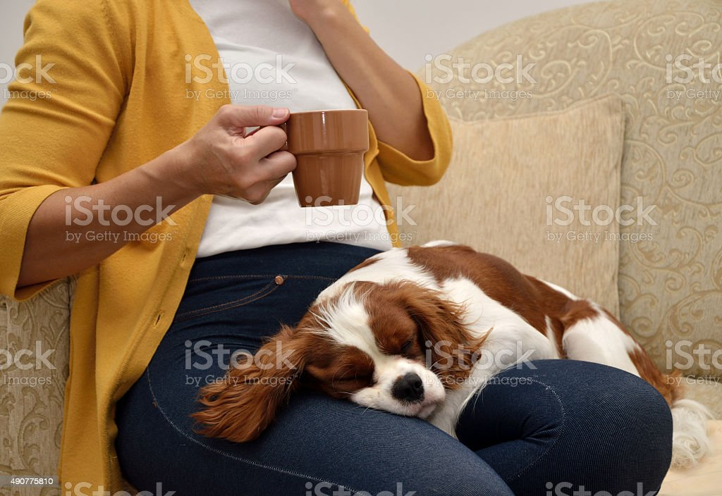 Lady and dog stock photo