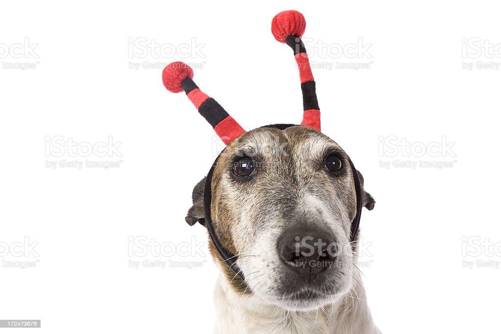 Lady Bug Dog stock photo
