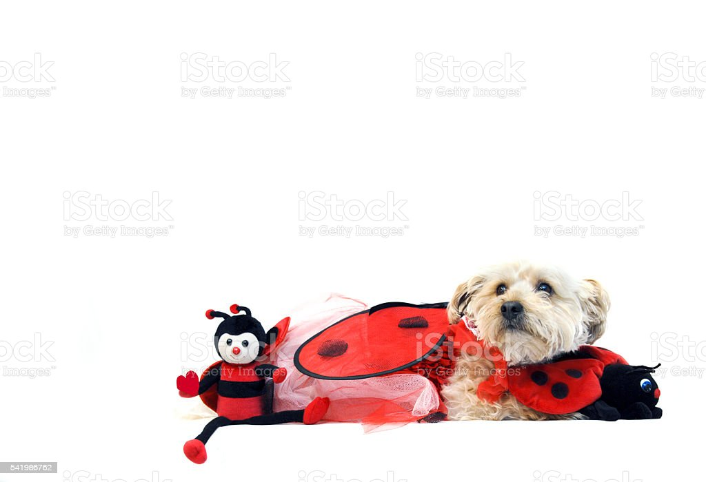 Lady Bug for Valentines Day stock photo