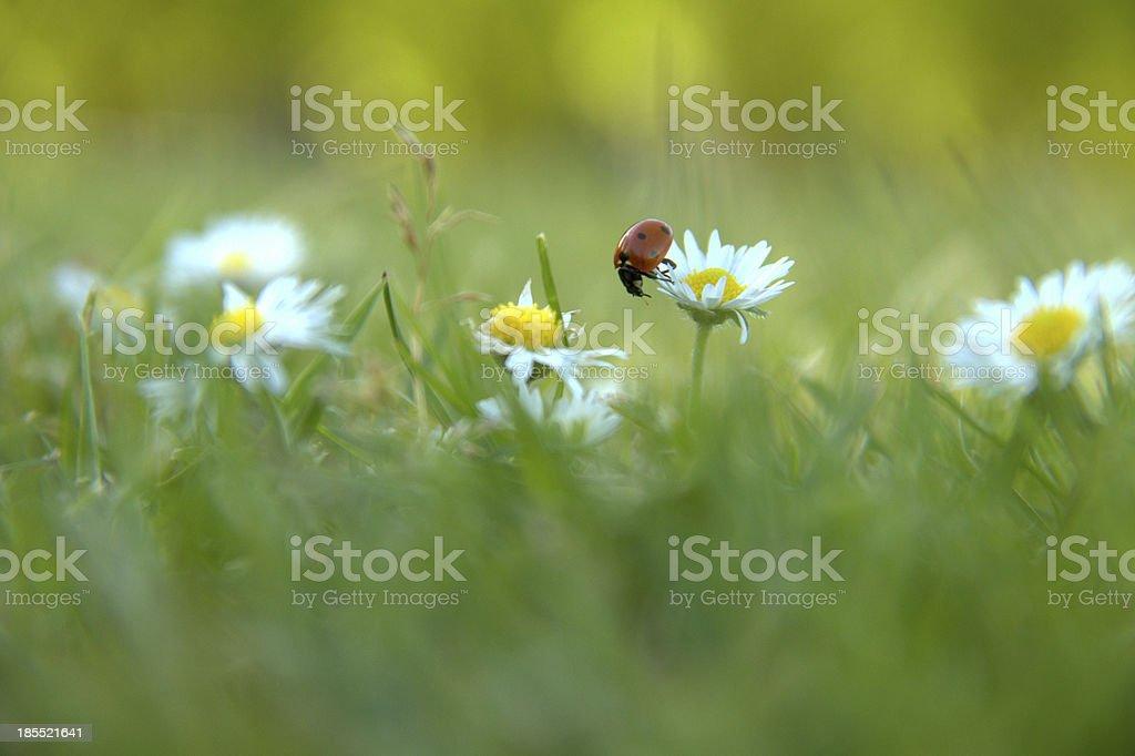Lady Bug stock photo