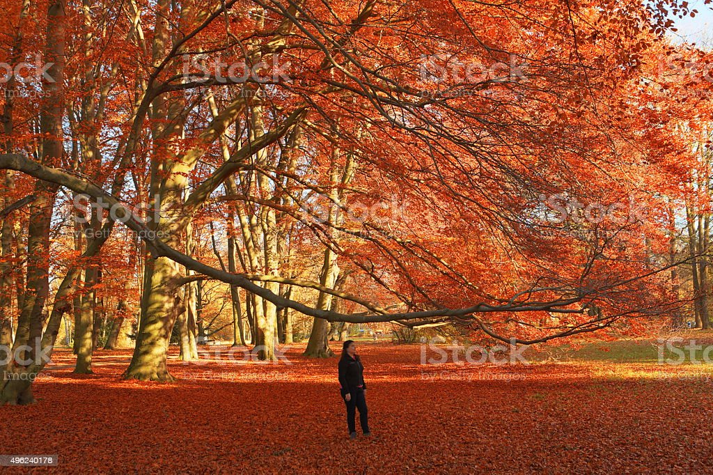 Lady Decorated in Red stock photo