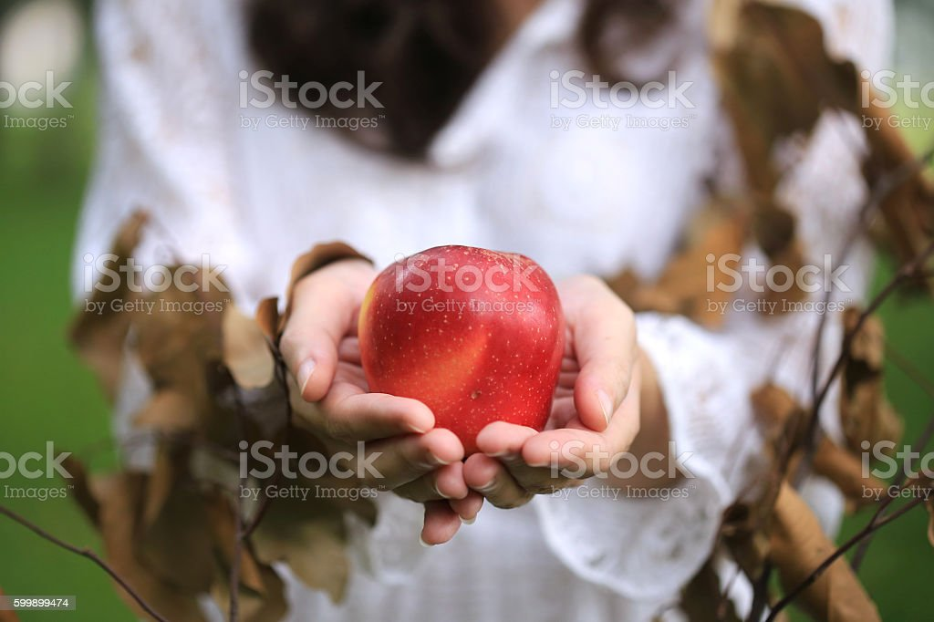 Lady holding a ripe apple in her hand stock photo