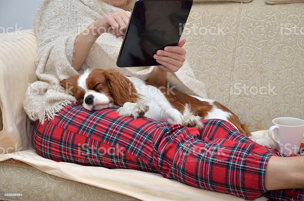 Lady holding tablet and cavalier dog stock photo
