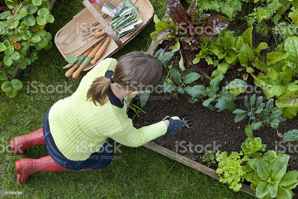 Lady Weeding A Corner of a Raised Bed Vegetable Garden stock photo