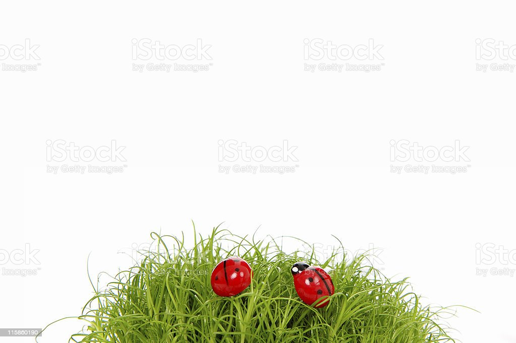 Ladybird in green grass royalty-free stock photo