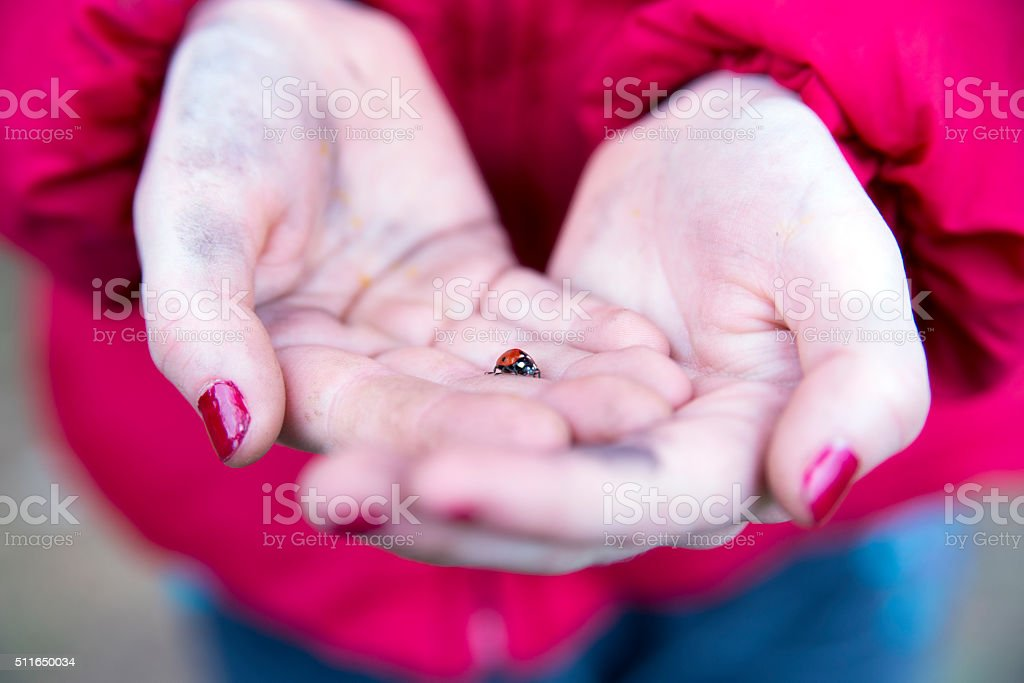 Ladybird lucky charm in the hand stock photo