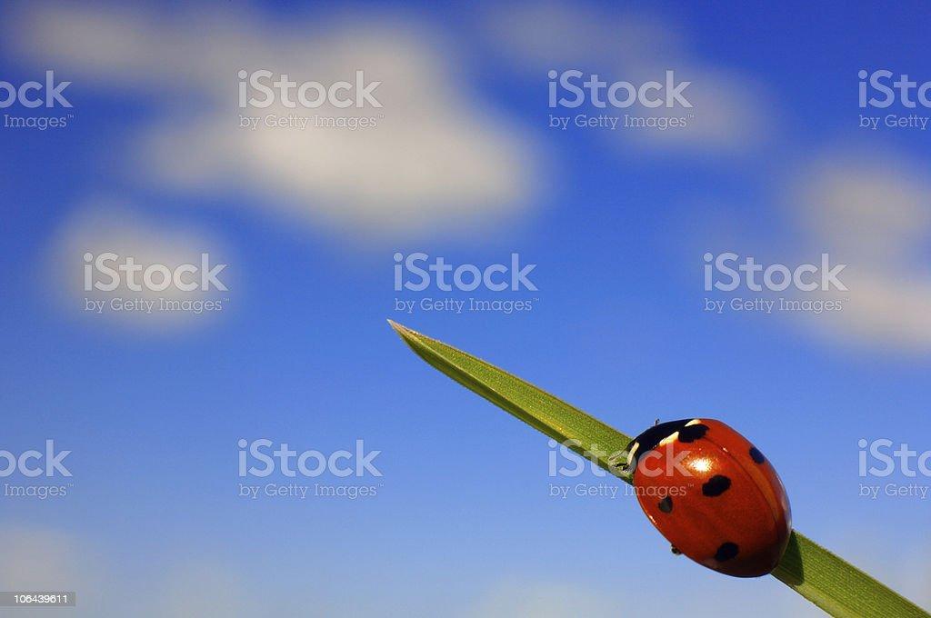Ladybird on grass stock photo