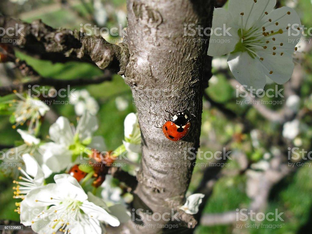 Ladybird #4 royalty-free stock photo