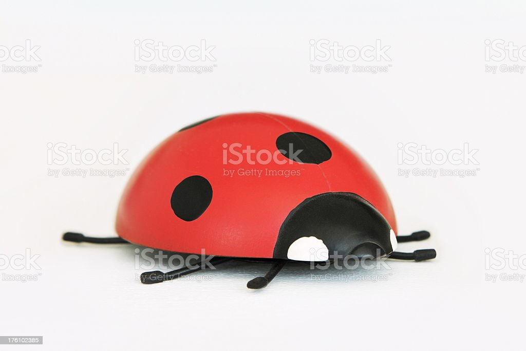 Ladybug Coccinellidae Beetle Insect royalty-free stock photo
