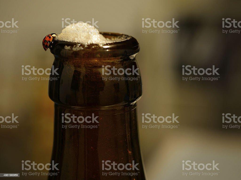 Ladybug drinking beer stock photo