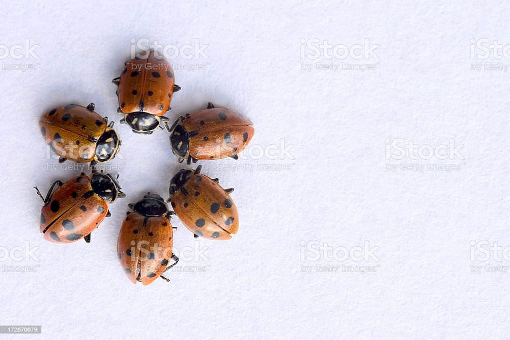 Coccinella fiori off center foto stock royalty-free