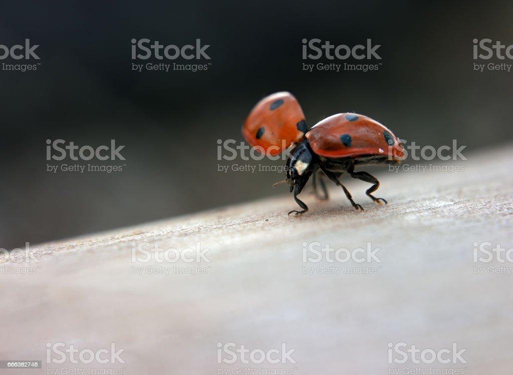 Ladybug going party stock photo