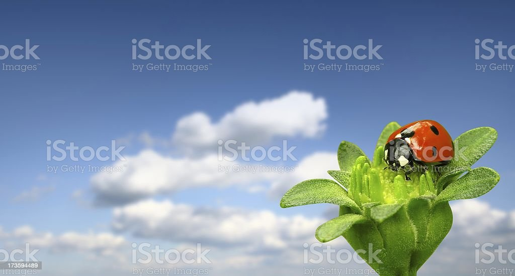 Ladybug on blue sky royalty-free stock photo
