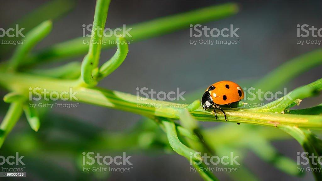 Ladybug on grass green on background. stock photo