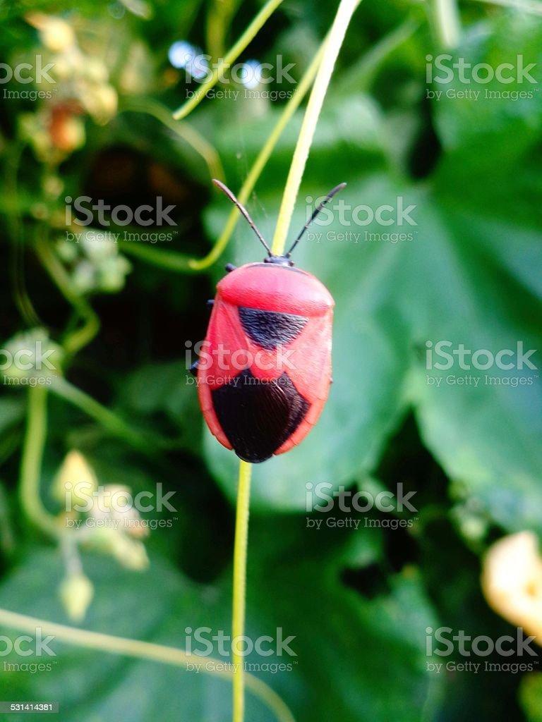 Ladybug on Green Plant royalty-free stock photo
