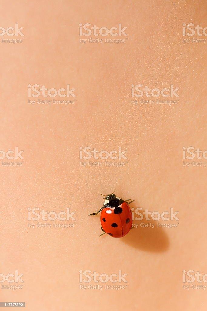 Ladybug on skin royalty-free stock photo
