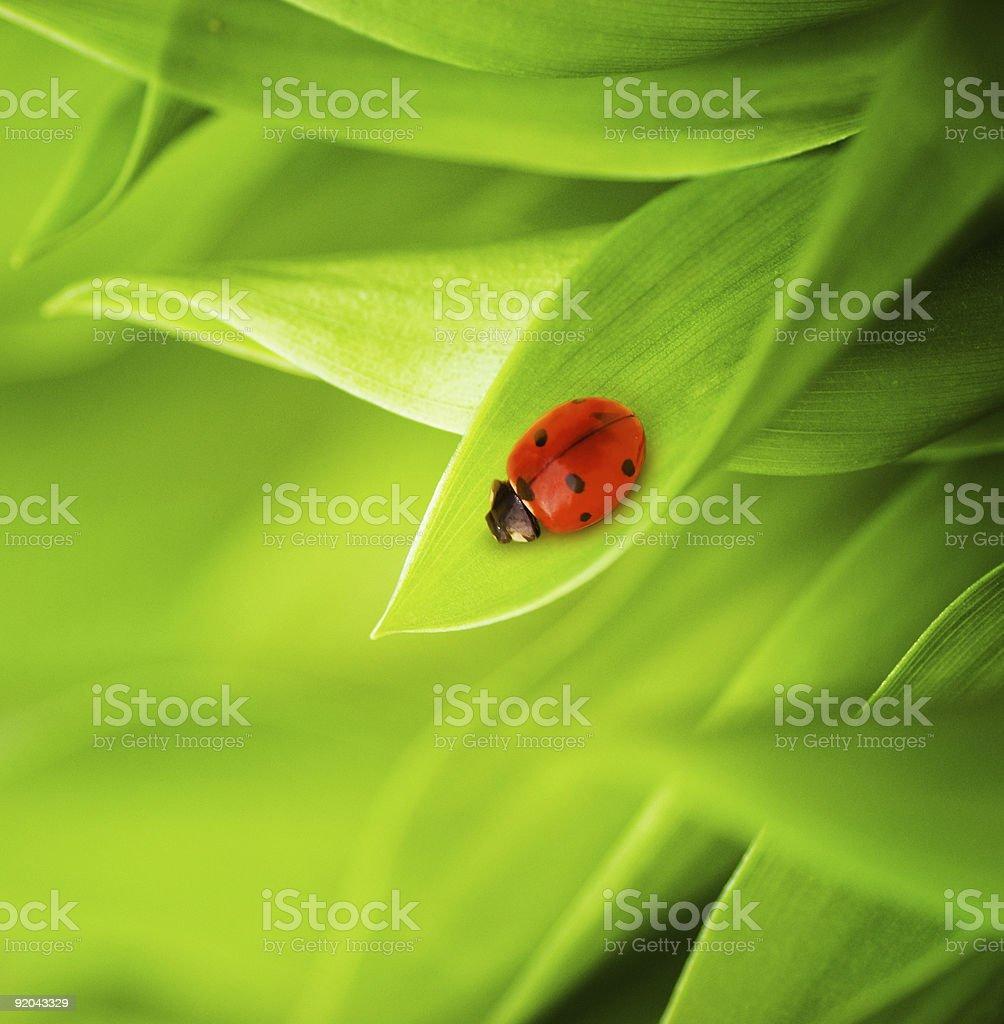 Ladybug sitting on a fresh green grass royalty-free stock photo