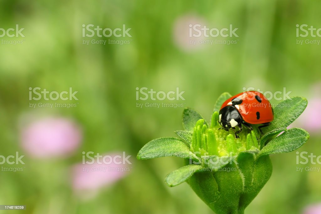 Ladybug sitting on a green flower stock photo