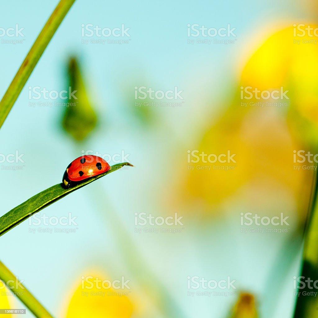 Ladybug sitting on green leaf royalty-free stock photo